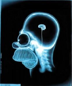 Cervello_di_Homer_Simpson