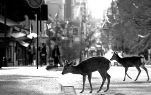 cerbiatti in città