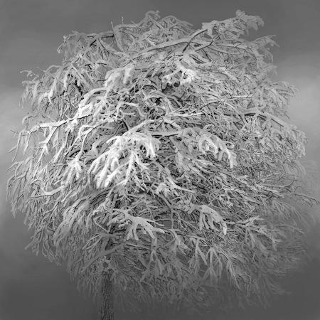 irene-kung-albero-neve