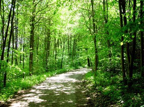 foresta-cesane