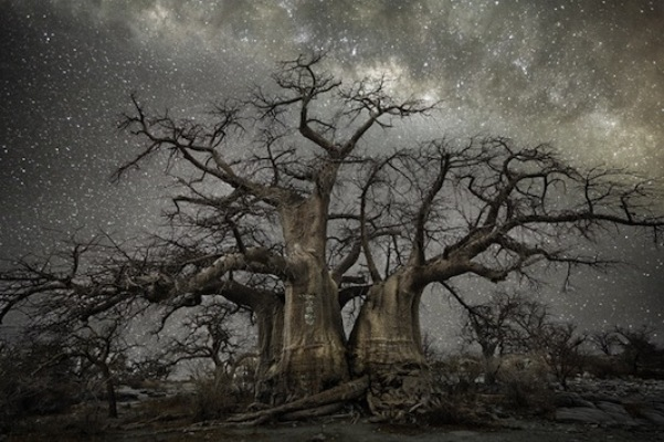 Beth Moon, Fornax, 2013, stampa al platino palladio, 81x120 cm, tratta dalla serie Diamond Nights ©  PH Neutro, Pietrasanta