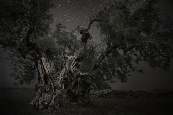 Beth Moon, Monoceros, 2013, stampa al platino palladio, 81x120 cm, tratta dalla serie Diamond Nights © PH Neutro, Pietrasanta