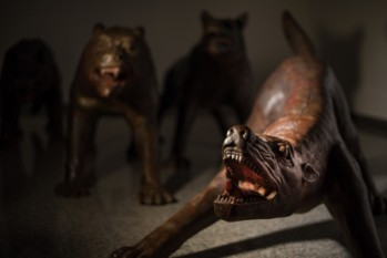 2.Wolves Coming , 2008-2010 ph. Michele Stanzione