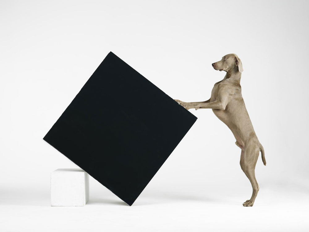 constructivism-william-wegman