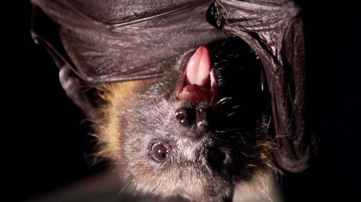 I pipistrelli sono parte di noi