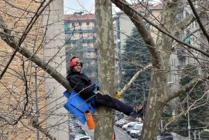 TAGLIO ALBERI PER CANTIERE M4, IN VIA LORENTEGGIO, PROTESTA DI MATTIA CALISE