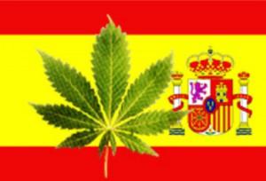 Nel 218 il Governo Spagnolo ha concesso 21 mila ettari di terreno per la coltivazione di marijuana a uso terapeutico