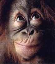 scimmiaok