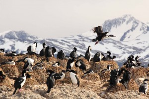 I Pinguini di Magellano si godono qualche raggio di sole