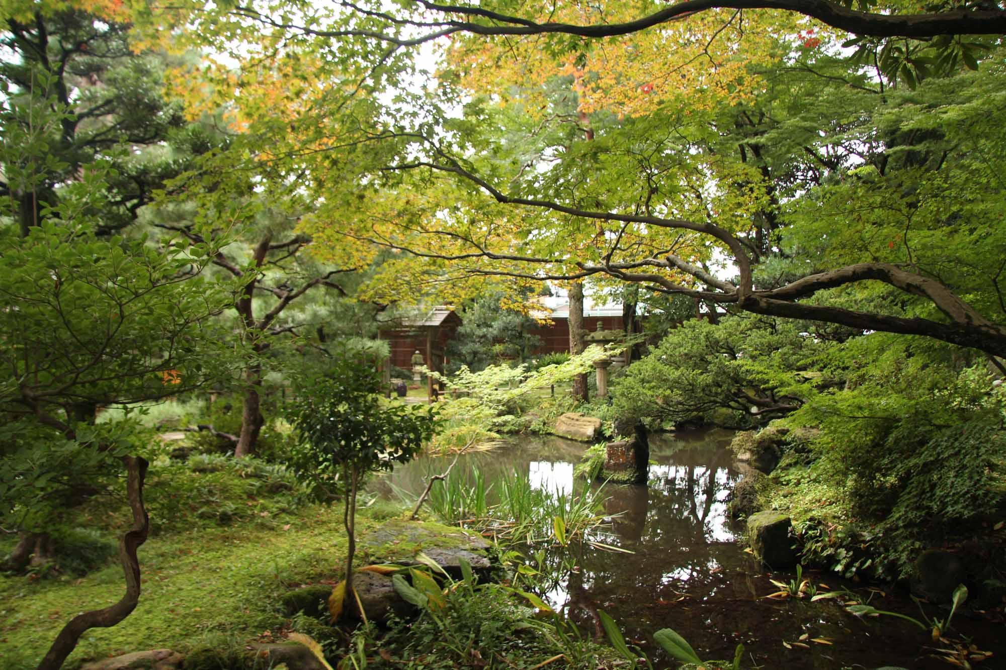 Acero Giapponese Verde l'altro giappone – viaggio per voi