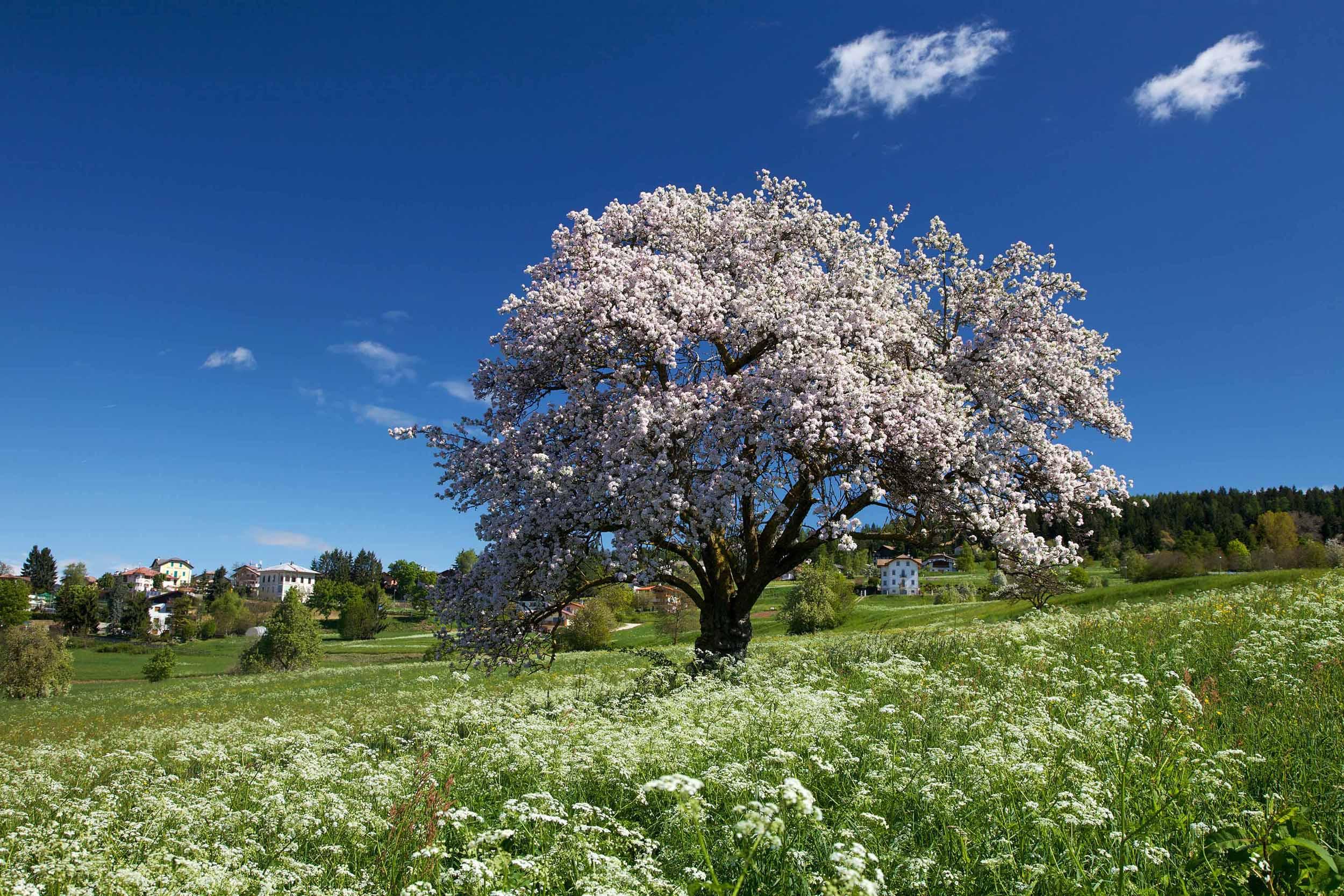 Trentino in fiore – Viaggio per voi e9fac514276